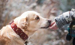 Общината довършва изграждането на приют за бездомни животни в Сливен