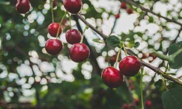 Актове и глоби при акция по опазване на реколтата