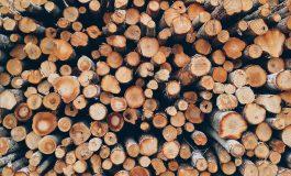 Спецоперация разкри нарушения в горски участък и фирма за дърва