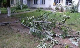 Разследват кой отсече дървета в Мокрен