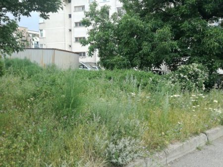 Храсти и треволяци превземат тротоарите в Сливен