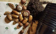 Малките ще засаждат дръвчета в сливенски детски градини
