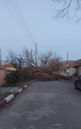 Бурята счупи прозорци на кметство, събори дървета и скъса кабели в Сливенско
