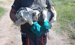 Спасиха 4 щъркелчета в Желю войвода