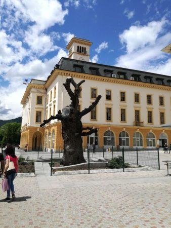 Общината дава 10 000 лв. за най-добрите проекти за Стария бряст