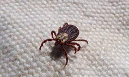 Пръскането срещу комари и кърлежи в Сливен продължава