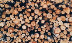 Сливенски горски конфискуваха 41 кубика дърва