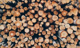 Хванаха ТИР с близо 50 кубика незаконна дървесина