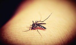 Ще пръскат паркове и градинки срещу комари