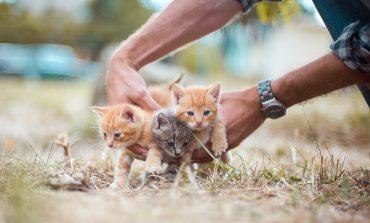 Сливенски пожарникари сваляха малки котенца от покрив