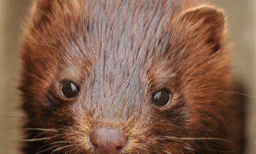 Над 100 тона умрели животни заровени в Сливенския балкан