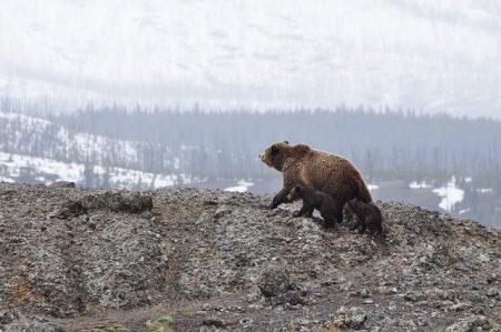 """Сигнал за мечка недалеч от """"Клуцохор"""""""