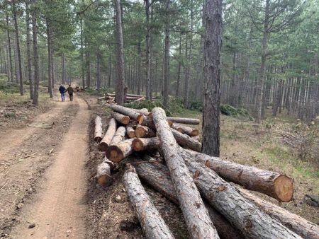 Още трима горски са освободени след проверки на Шакиров и колегите му